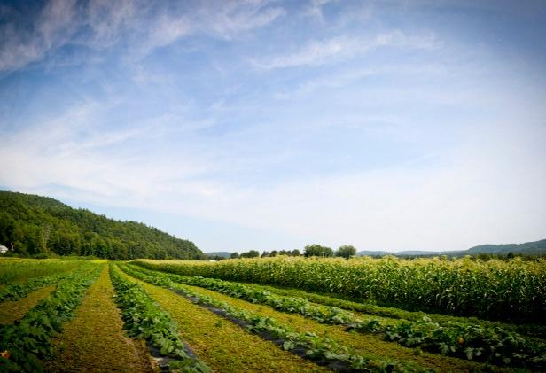 farm-loans-david-blais-3.jpg